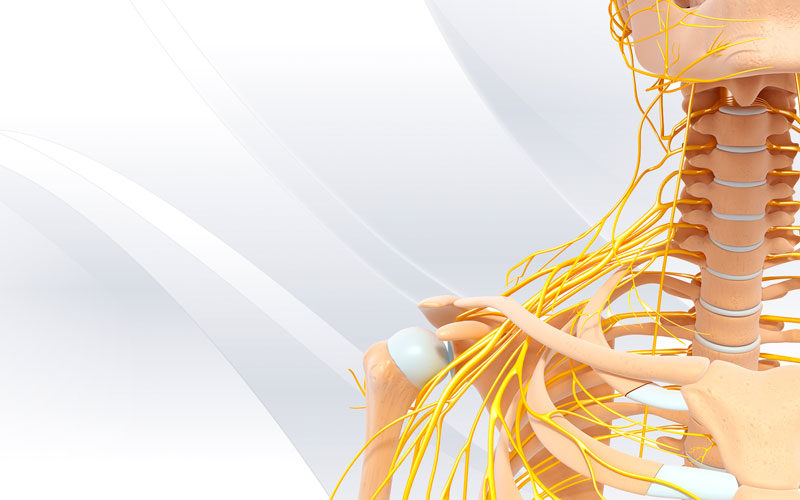 nervio-periferico